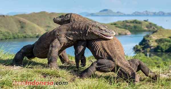 4 Objek Wisata di Pulau Komodo