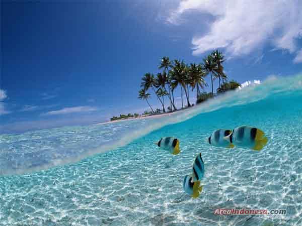 Keindahan Bawah Laut di Bunaken